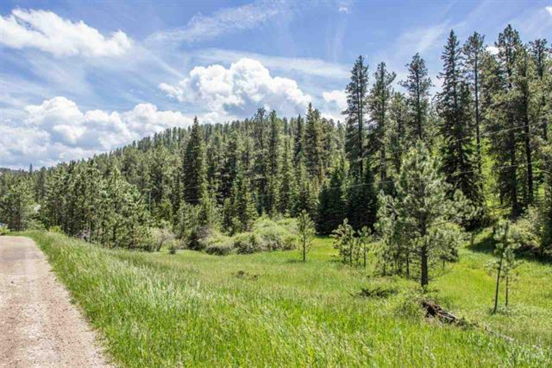 1.73 acres of Creek Land Bordered by Forest Service