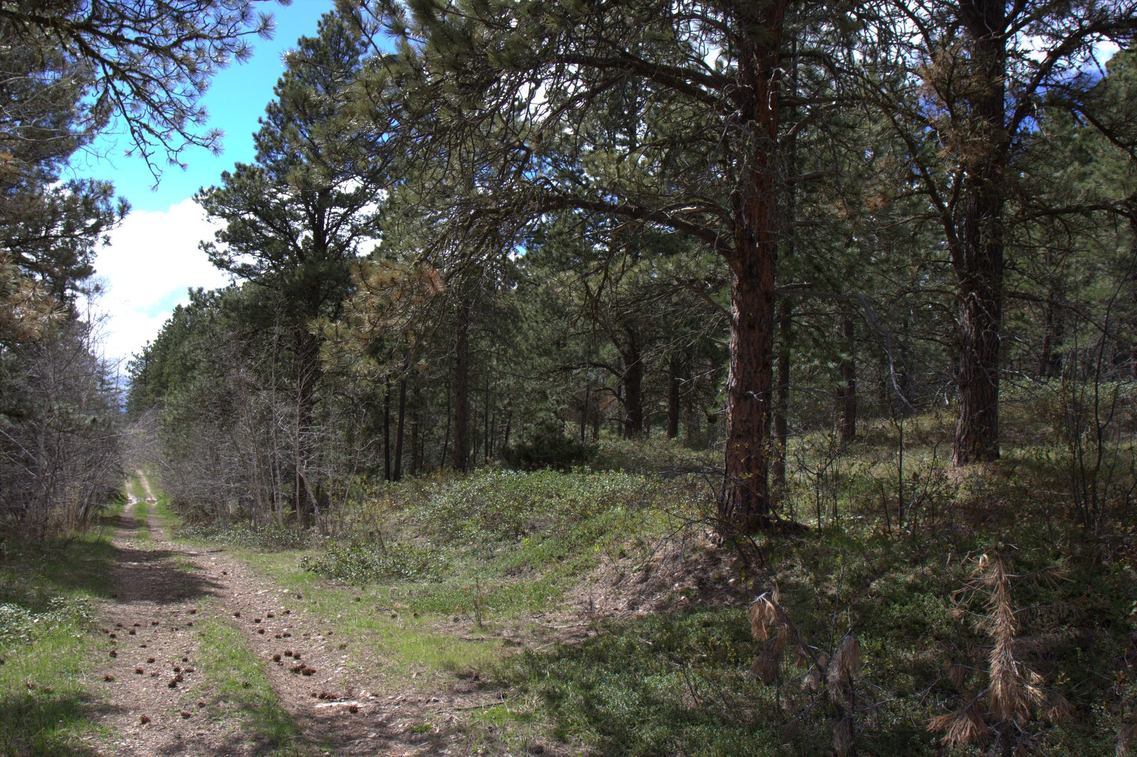 2.30 acres of Terry Peak Land