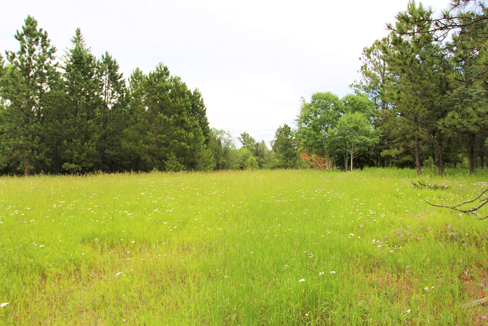 5.14 acres off of Yellow Creek Road