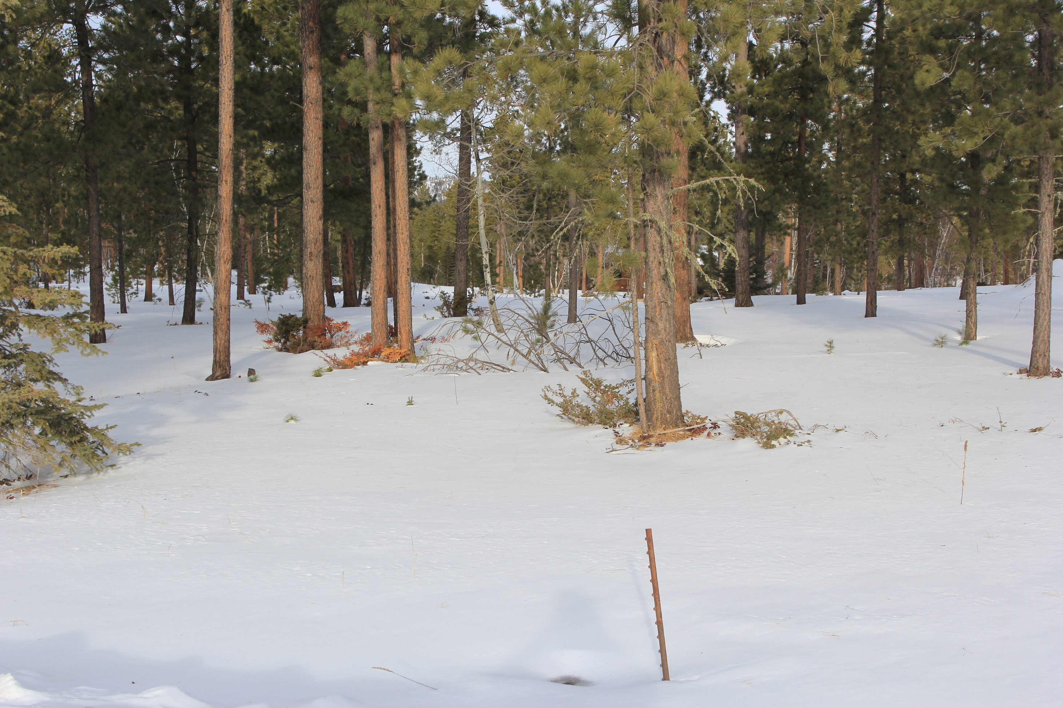 Recreational Acreage in Powder House Pass S/D