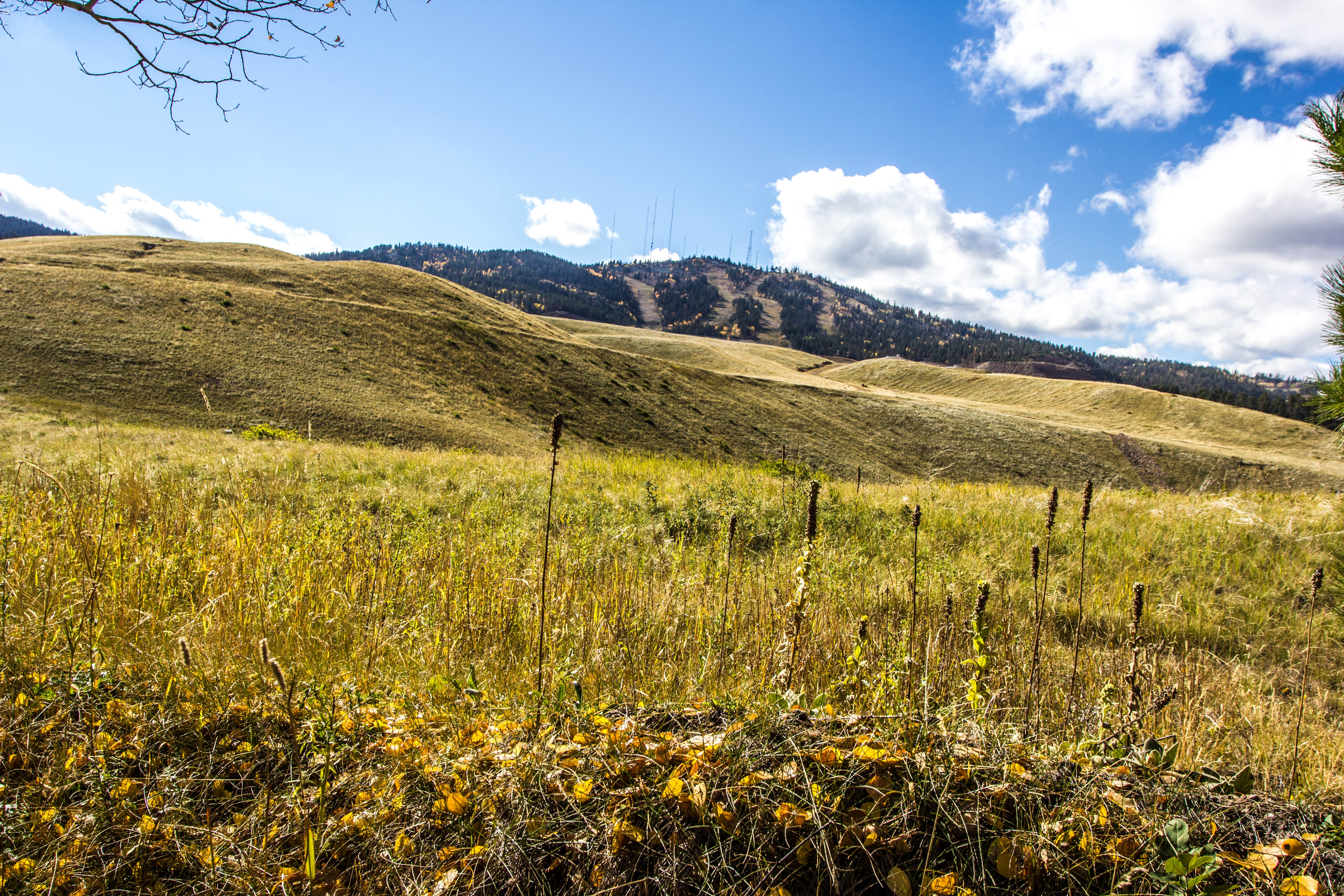 10.33 acres & Terry Peak Views