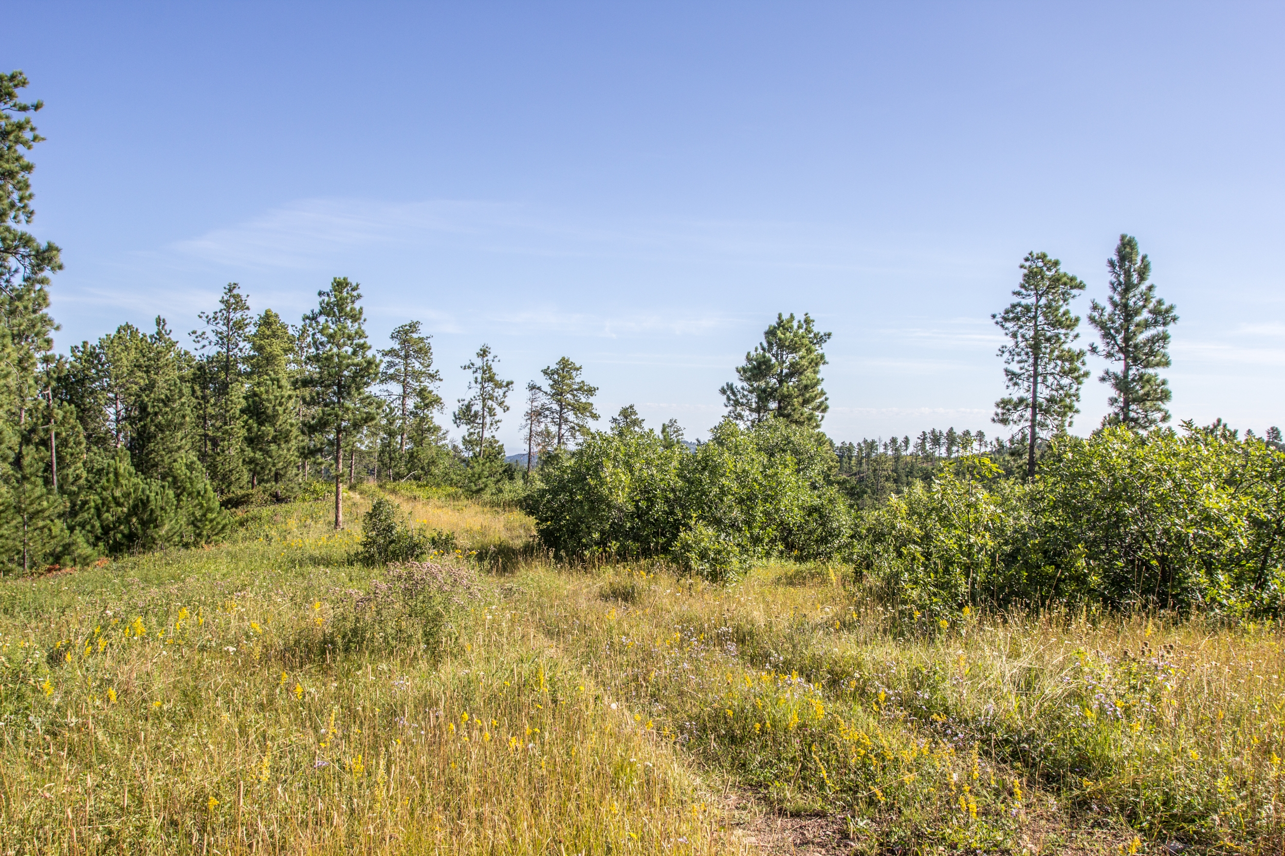 36.22 Acres - No Covenants - Minutes from Lead