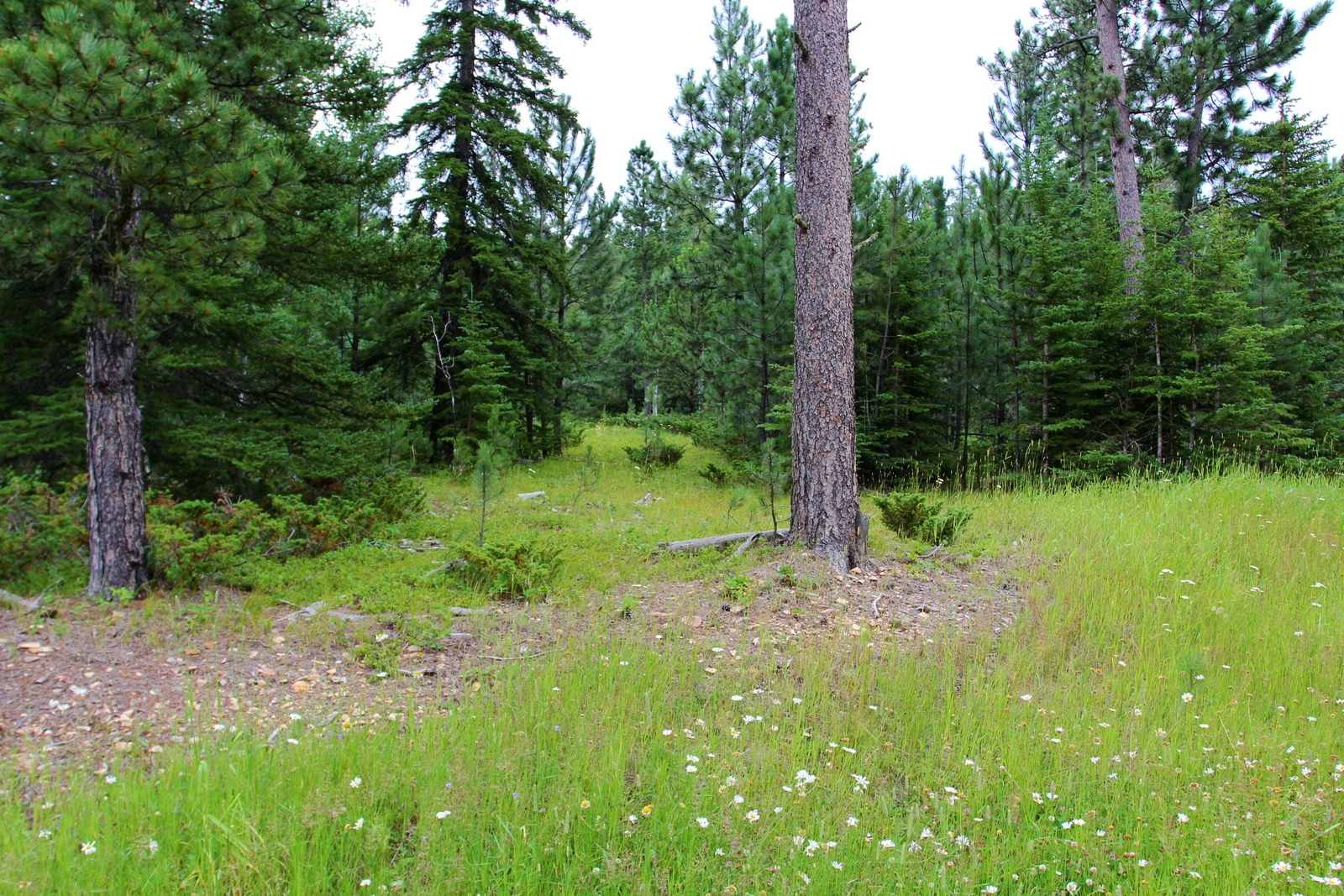 4.33 acres off Yellow Creek Road